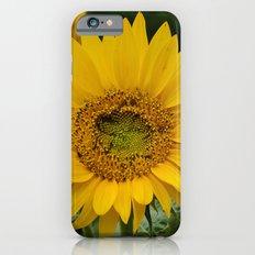 September Sunflower iPhone 6s Slim Case