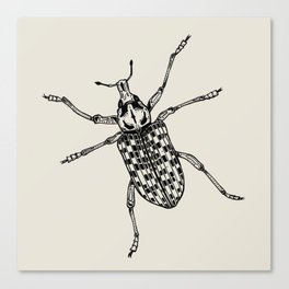 Botany Bay Weevil Canvas Print