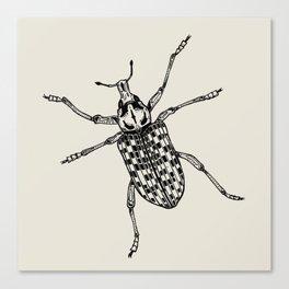 Botany Bay Weevil Canvas Print