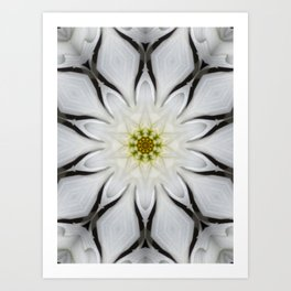 White Flower Design Art Print
