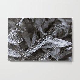 Beauty in the shades of Hawaii Metal Print