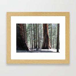 Sequoia Underworld Framed Art Print