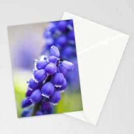 Muscari Stationery Cards