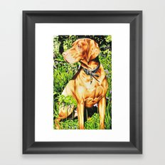 Hungarian Vizsla Framed Art Print