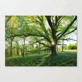 To Swing On The Tree Of Hope Canvas Print