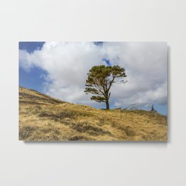Highland Tree Metal Print