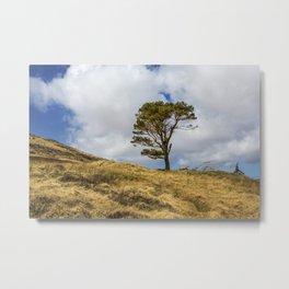 Highland Tree Metal Print