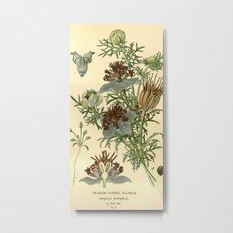 Spanish Fennel Flower Metal Print