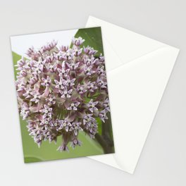 Milkweed Flowers Stationery Cards