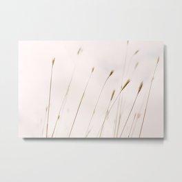 Tall grass against cloudy sky Metal Print