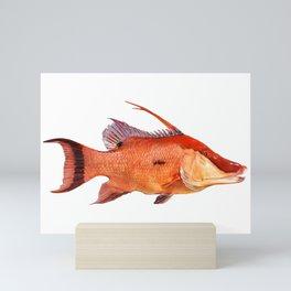 Hogfish Mini Art Print