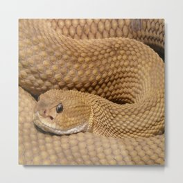Brown Rattlesnake  Metal Print