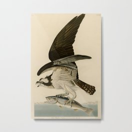 Vintage Osprey Catching a Fish Illustration (1838) Metal Print
