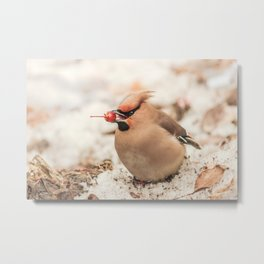 Winter berry dessert Metal Print