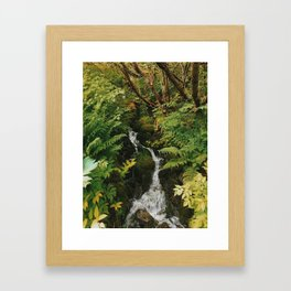 Rainforest brook Framed Art Print