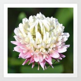 Flower | Flowers | One Clover Flower | Nature Photography | Nadia Bonello Art Print