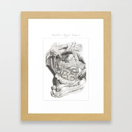 Human Anatomy Art Print LIVER STOMACH COLON Vintage Anatomy, doctor medical art, Antique Book Plate Framed Art Print