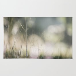 Detail of wild grass growing on a heath with early morning light. Norfolk, UK. Rug