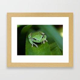 Green frog 20 Framed Art Print