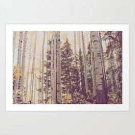 Autumn Aspen Forest Art Print