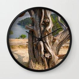 OLD JUNIPER AT BURROWS PASS ANACORTES Wall Clock
