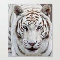 tiger Canvas Prints featuring TIGER TIGER by Catspaws
