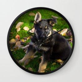 Little German Shepherd puppy Wall Clock