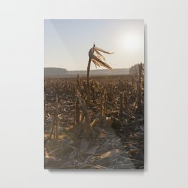 one long corn stalk Metal Print