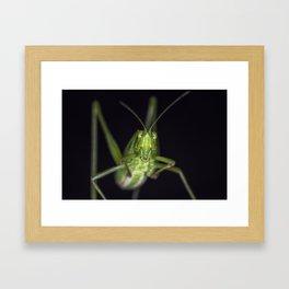 Curious Katydid Framed Art Print