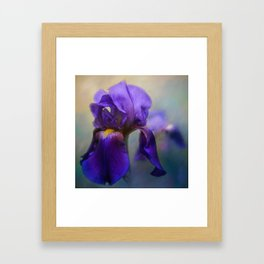 The First Iris Framed Art Print