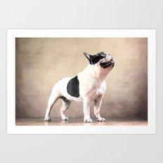 Frech bulldog Art Print