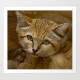 SAND CAT Art Print