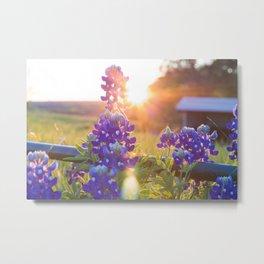 Sun Shining through the Bluebonnets Metal Print