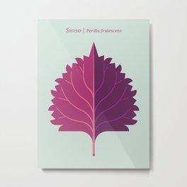Shiso Leaf Red Purple Metal Print