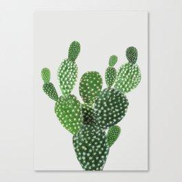 Cactus II Canvas Print