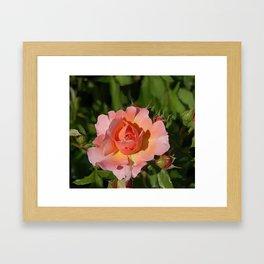The Subject is Roses 103 Framed Art Print