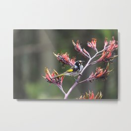 Honey on my mind - New Holland Honey Eater Metal Print