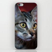 nori iPhone & iPod Skins featuring Nori by Yvo Photography