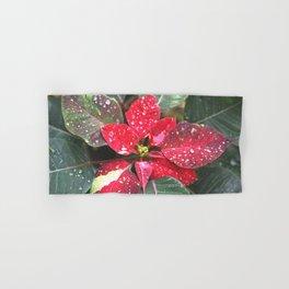 Raindrops on a poinsettia Christmas flower Hand & Bath Towel