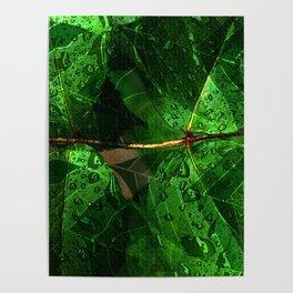 Leaves V8WL Poster