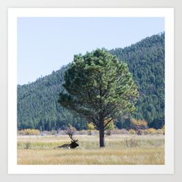 Elk Relaxation Art Print