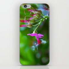 Little pink iPhone & iPod Skin