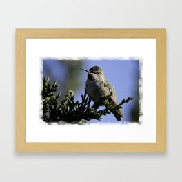 Ruby-Throated Hummingbird Framed Art Print