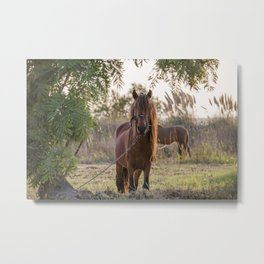 Beautiful young horse with long mane and bridle tied to rope, surrounded by foliage of tree. Metal Print