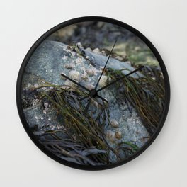 Natural Blue Rock with Limpets and Seaweed Wall Clock