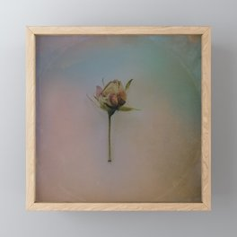 Once Upon a Time a Dancer Rose Framed Mini Art Print