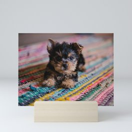 Scruffy Brown Puppy On Rainbow Rug Mini Art Print