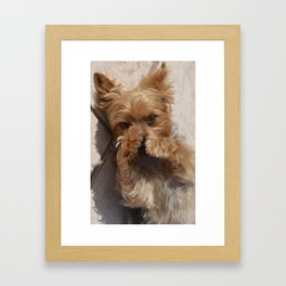 Put Em' Up - The Yorkie Dog Framed Art Print