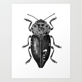 Beetle 11 Art Print