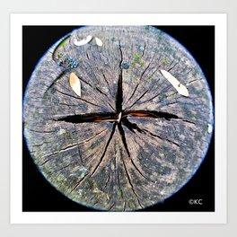 Wooden Star Art Print